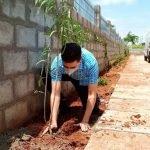 Greenbelt development & Plantation programme